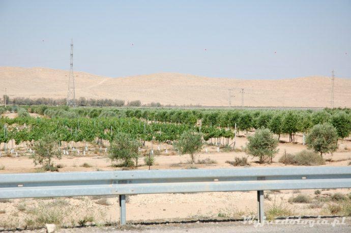 uprawa winorośli w izraelu