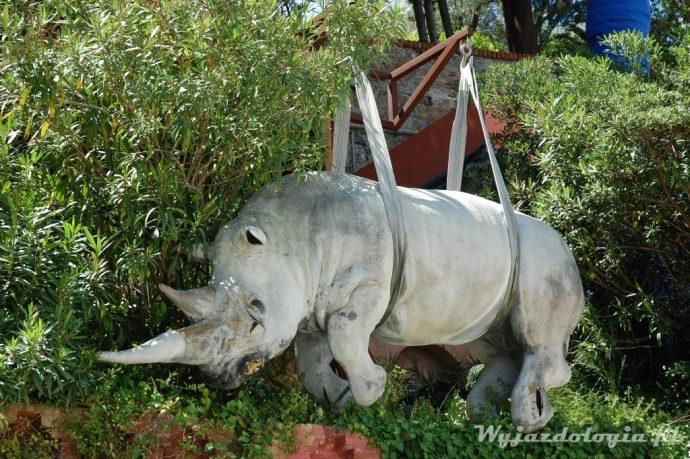 nosorożec na wolności we włoszech