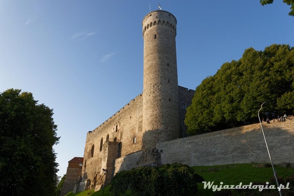 Tallin Długi Herman wieża