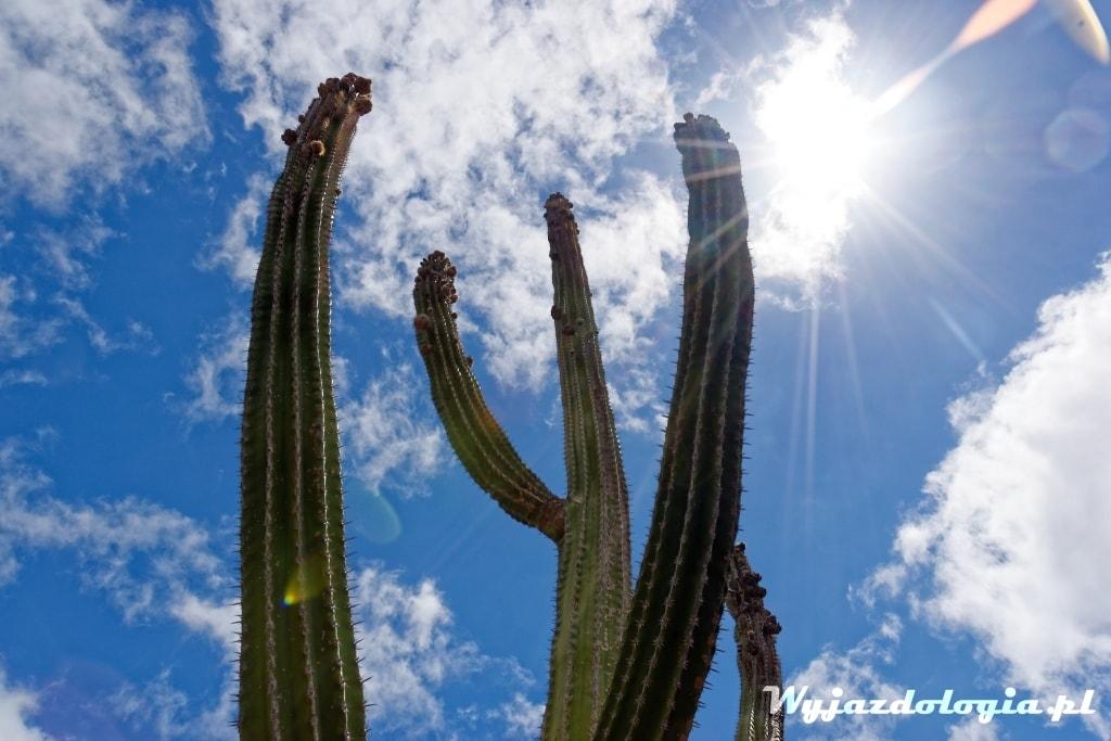 jak podlewać kaktusy