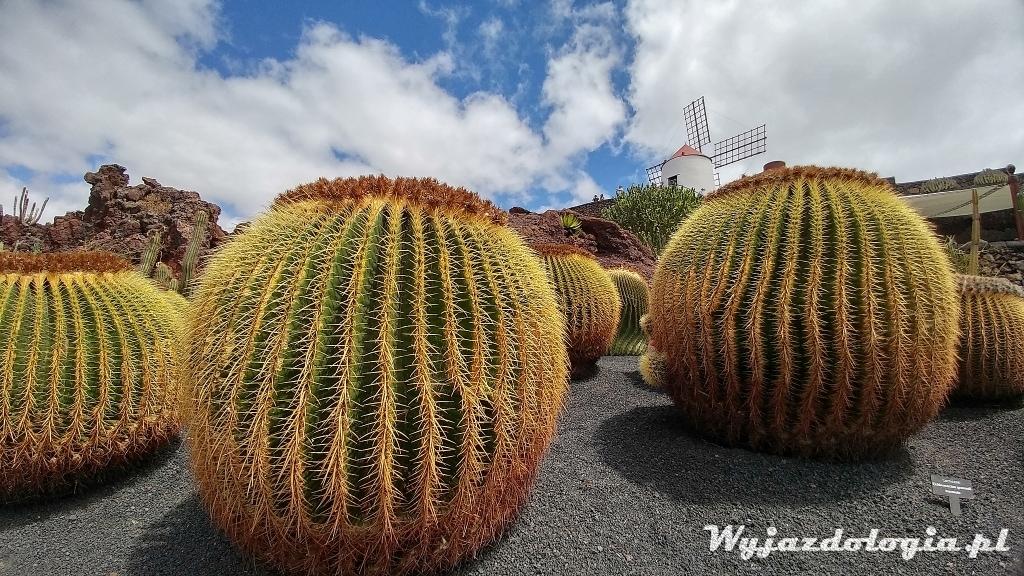 park kaktusów na lanzarote atrakcje