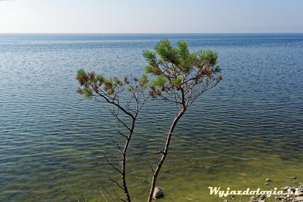 krzaczory na wyspie w Estonii