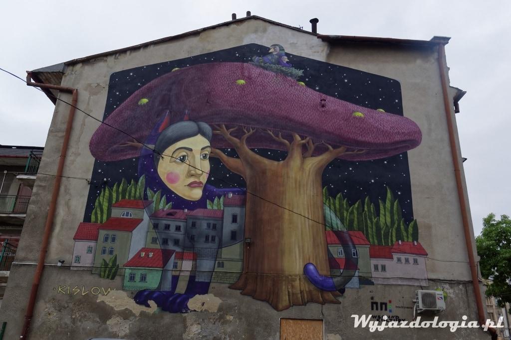 grzyb kot i mural Lublin