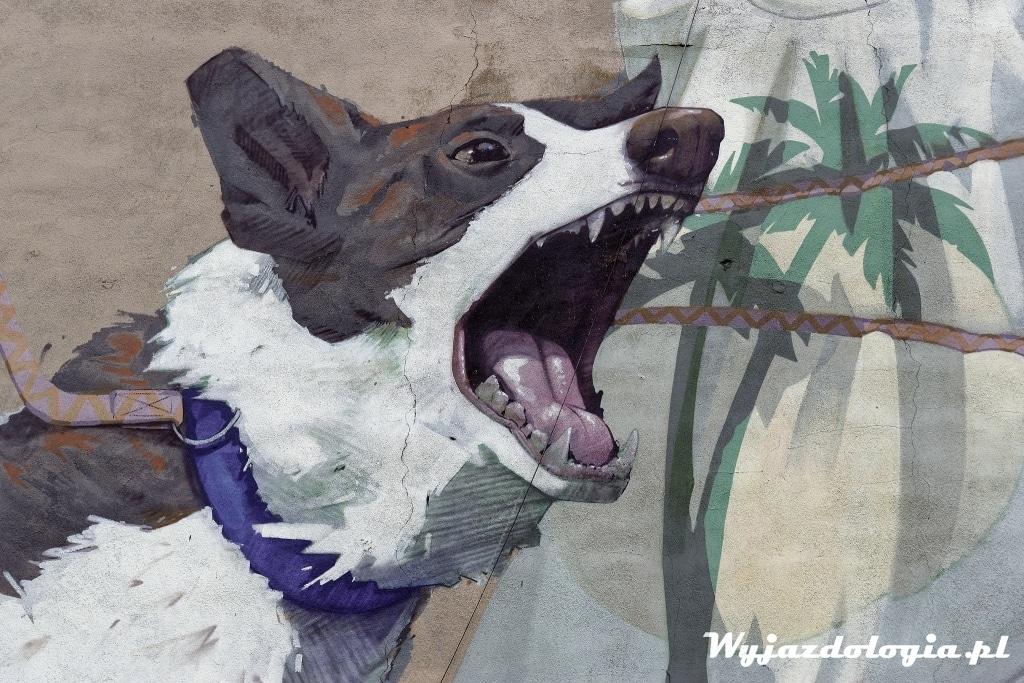 lublin dla psa