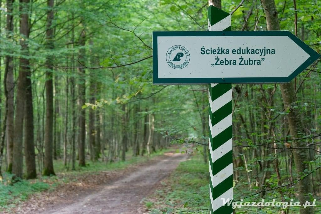 Żebra Zubra co zobaczyć w Białowieży