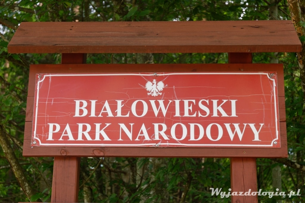co warto zobaczyć w Białowieży