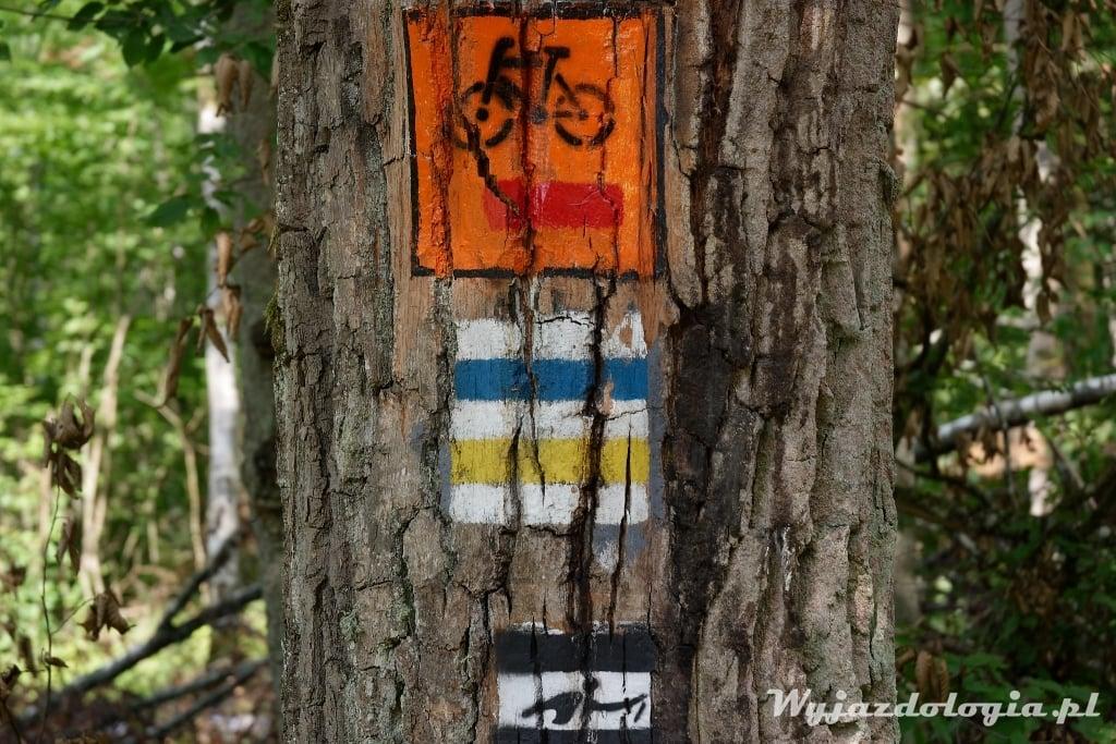 Białowieża szlaki rowerowe