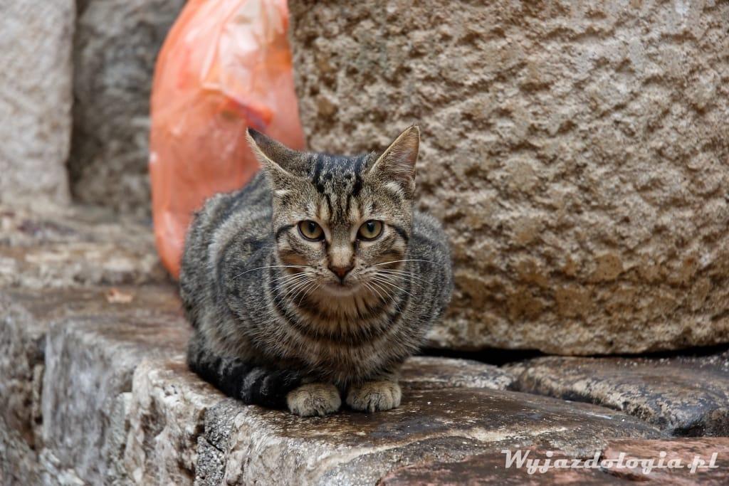koty koty zdjęcie kota