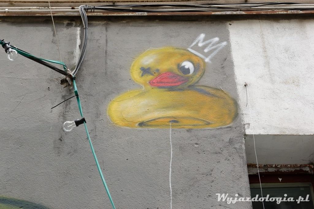 kaczka graffiti wroclaw