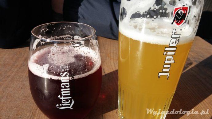 piwo w brugii