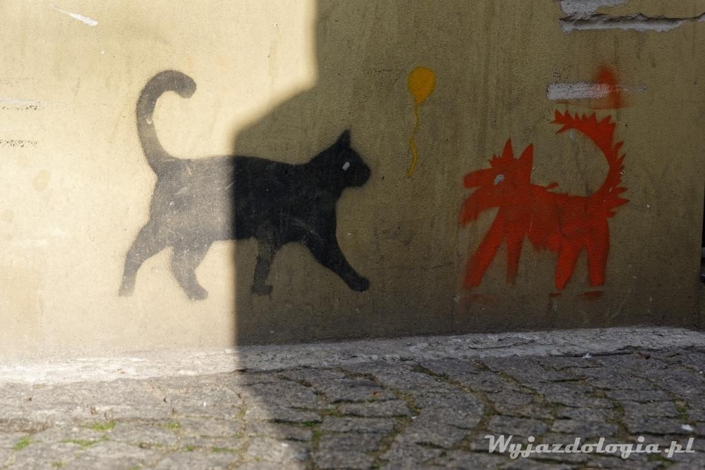 Koty Inko i Gnito Płock