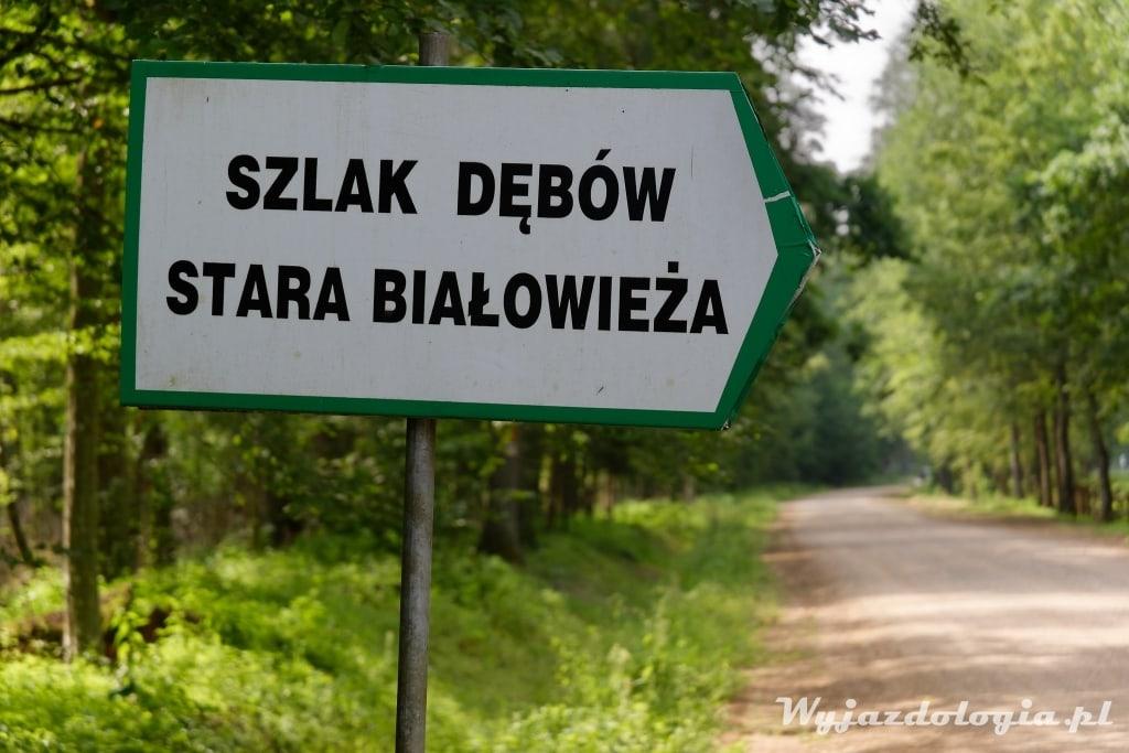 Szlak Dębów Królewskich Białowieża