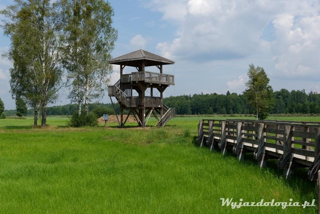 wieża widokowa białowieża pogorzelce