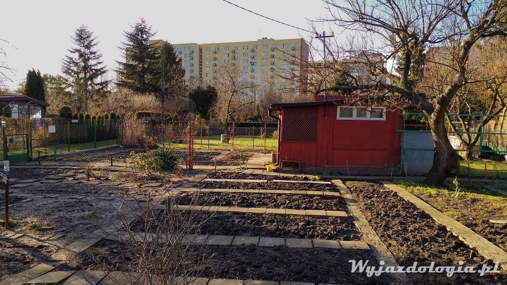 jak zaplanować ogródek działkowy