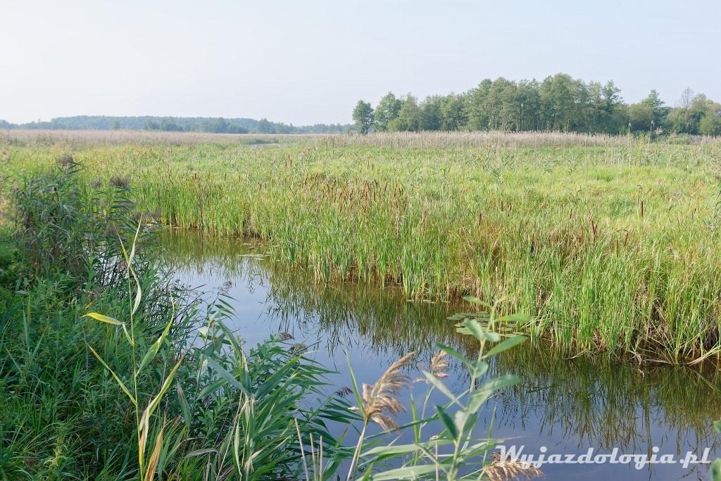 Rzeka Narew Park Narodowy