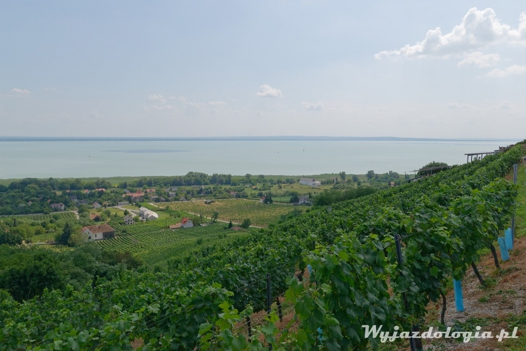 Badacsony winnica Balaton