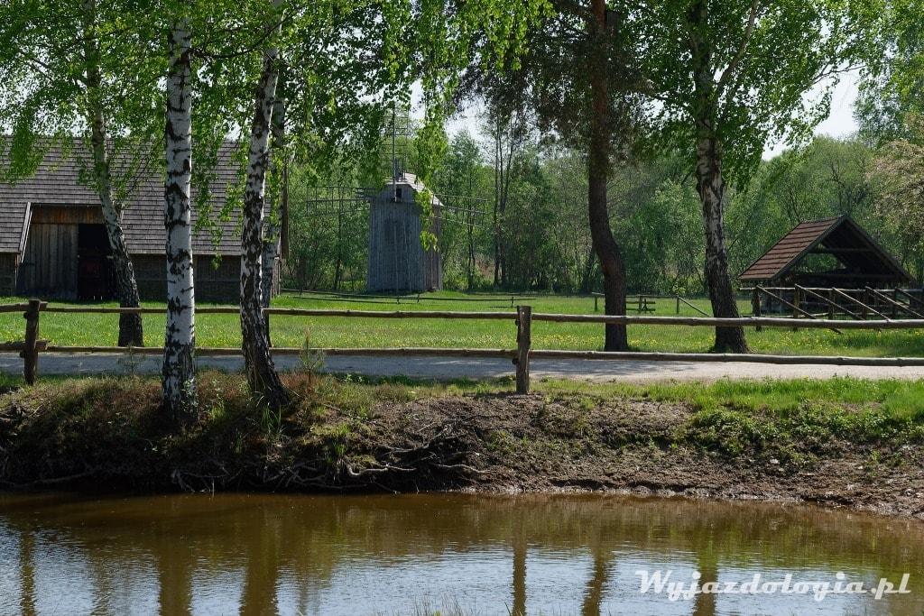 Brzozy w Skansenie w Kolbuszowej