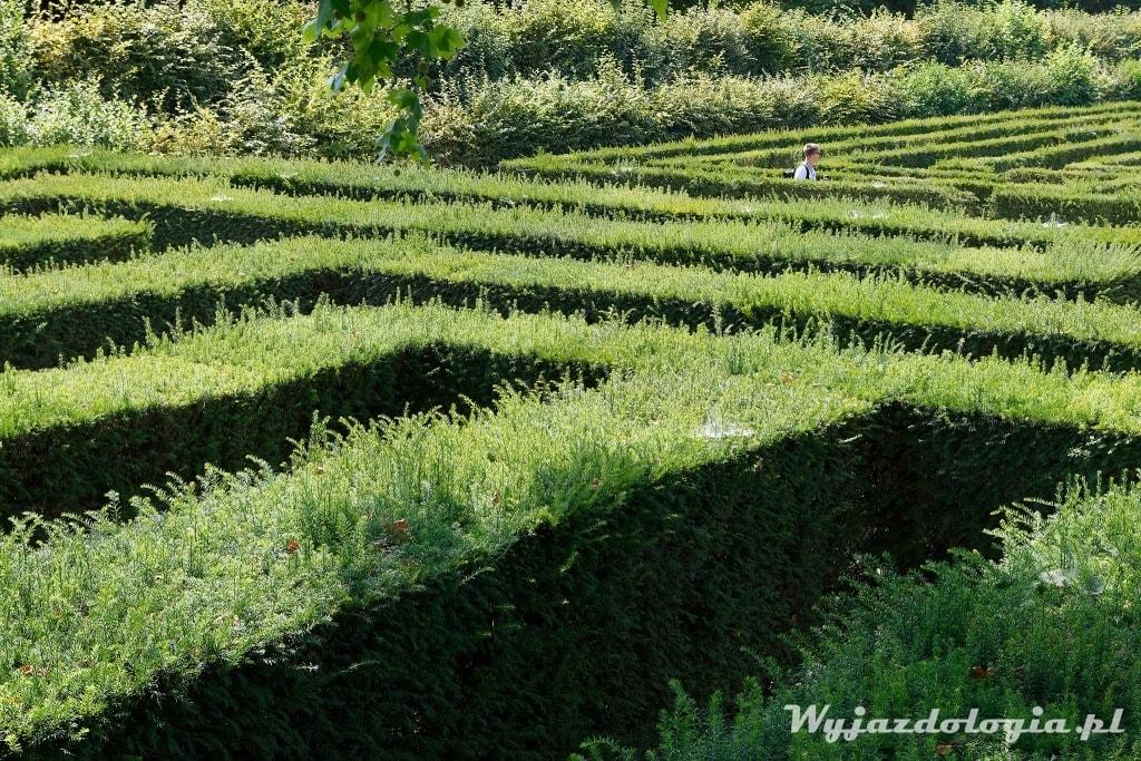 zielony labirynt przy Pałacu Schonbrunn to atrakcja Wiednia