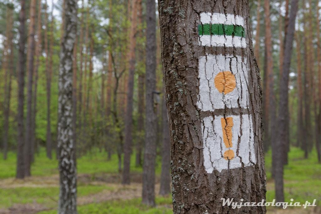 las okolice Celetynowa pod Warszawą