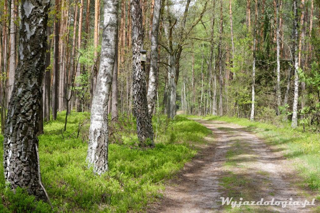 Mazowiecki Park Krajowbrazowy to podwarszawski las