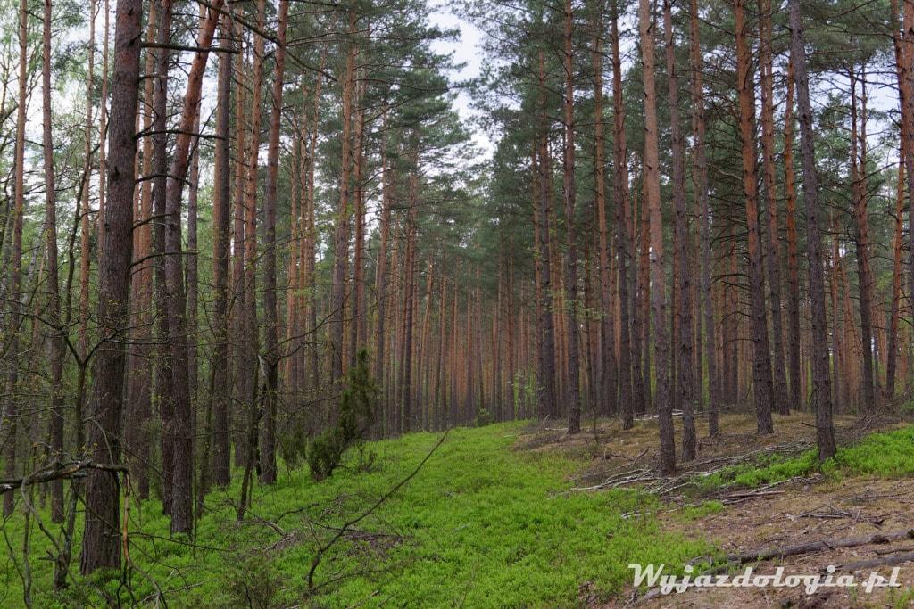 Warszawa gdzie do lasu