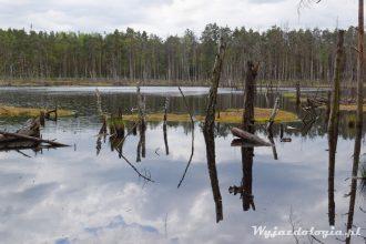 Gdzie do lasu pod Warszawą