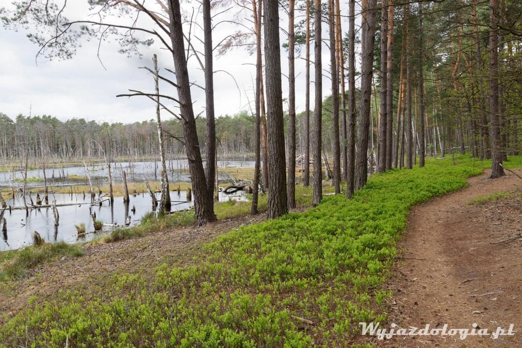 Las w okolicach Warszawy