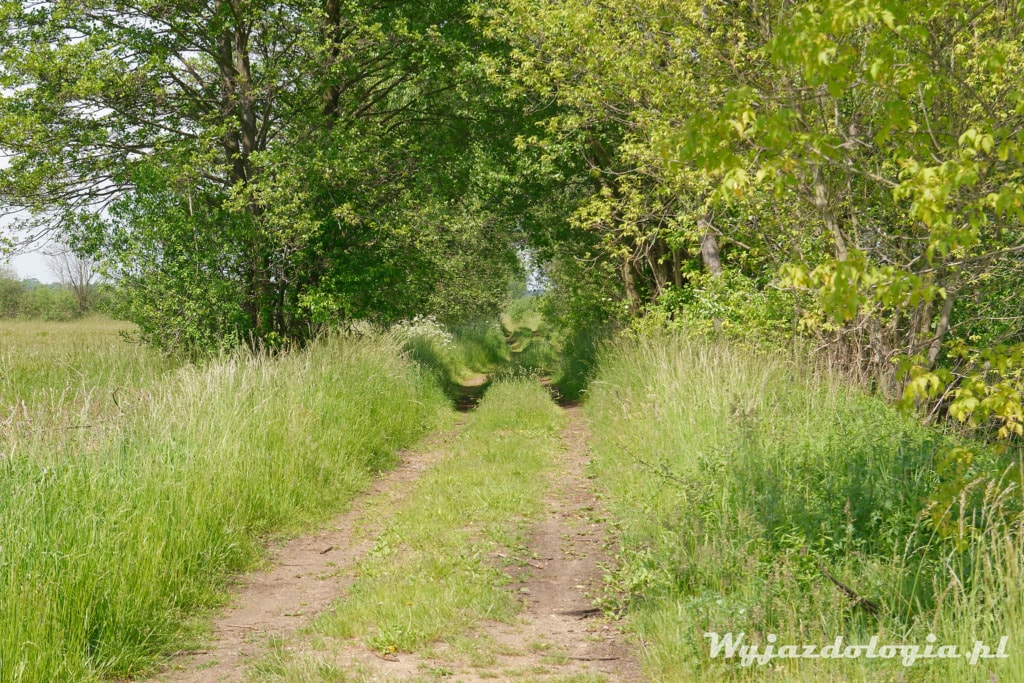 spacer skrajem łąki w okolicach Warszawy