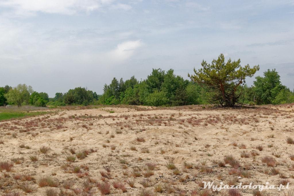 wydma Pękatka na spacer pod Warszawą